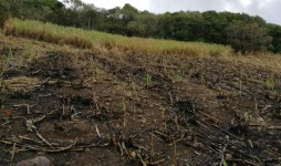 Agricultural Land to sell at Surinam