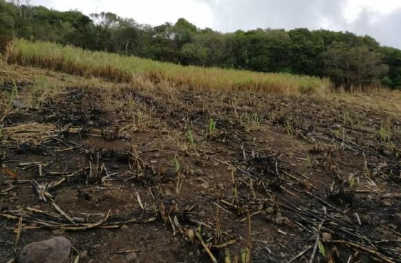 Property for Sale - Agricultural land - surinam