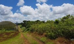 Agricultural land for sale - La Flora