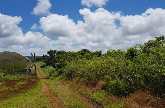 Property for Sale - Agricultural land - la-flora